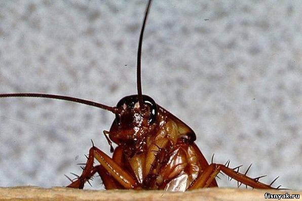 ...9: куда исчезли тараканы: 10: укрытие для клопов.