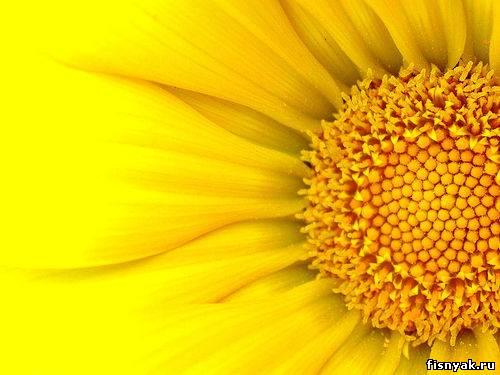 Ну что, продолжим.  Сегодня у нас в фаворитах - желтый цвет.  Мне этот цвет тоже очень...