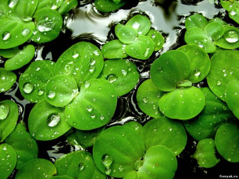 Зеленый: будучи цветом гармонии и баланса, зеленый цвет символизирует надежду...